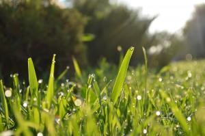 Garten, Rasen