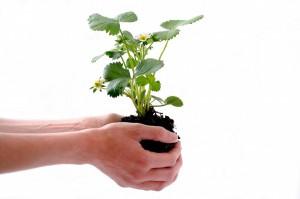 Pflanzensamen